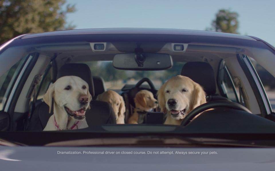 Subaru Goes to the Dogs…Again