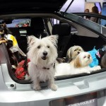 Tips for Travelling with a Pet in the Car