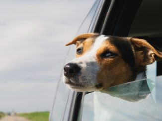 5 Great Cars for Dog Lovers