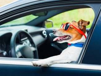 How to make your car dog friendly